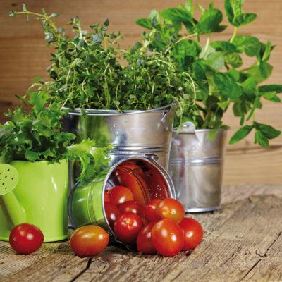 pomodori-basilico-secchio
